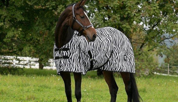 Het paard dat een zebra moest zijn